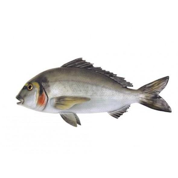 Imitazione Pesce Orata In Fiberglass 61 Centimetri Per Arredamento