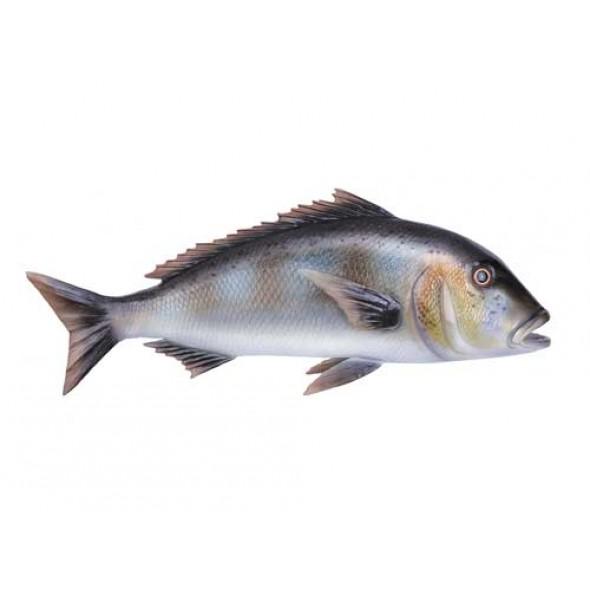 Imitazione Pesce Dentice In Fiberglass 63 Centimetri Per Arredamento